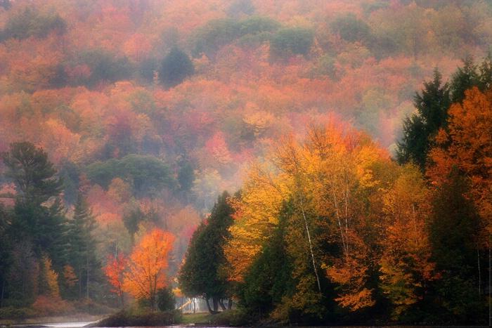 Nature's Colour Palette