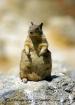 Fat Mama Squirrel