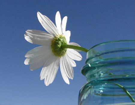 Ball Jar Daisy
