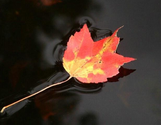 Reflection of Change