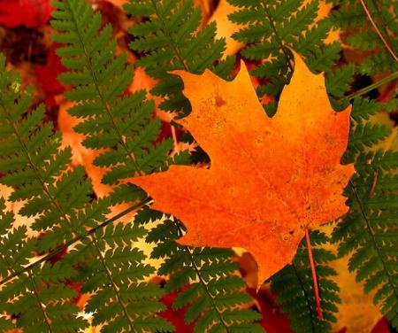 Leaf on Fern