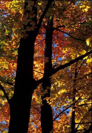 Backlit Foliage