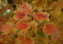 AutumnLeaves1