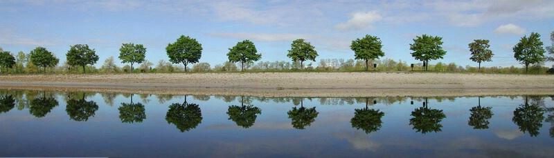 Trees at Lake Taconic