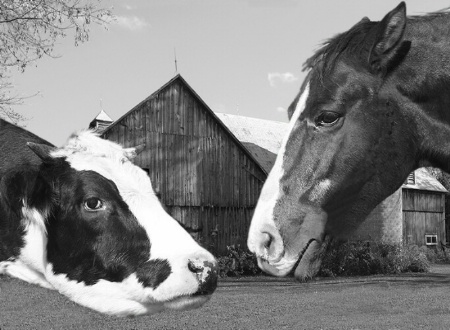 Barn Yard Gossip v.II