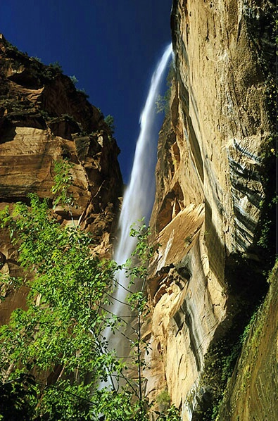Falls in Zion - ID: 587761 © Brian d. Reed