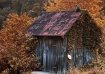 Autumn Shed