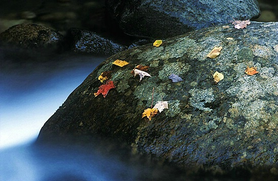 rock with leaves - ID: 590686 © Brian d. Reed