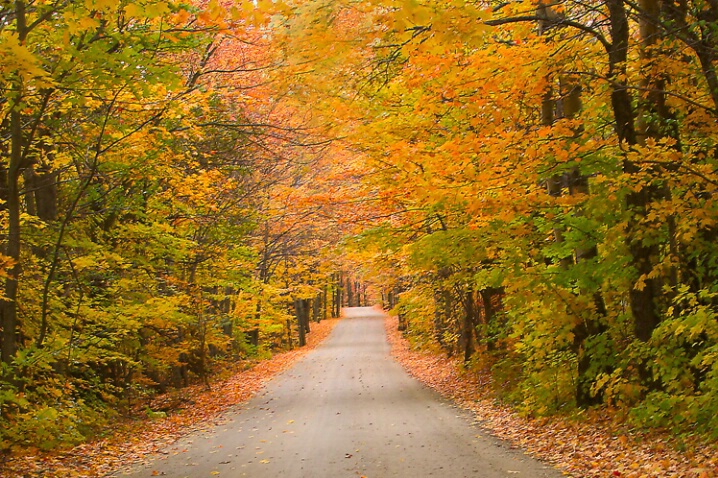 Fall-ing In Love With Vermont