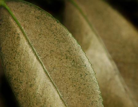 Leaf (and leaf)