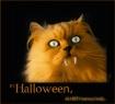 Halloween metamor...