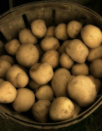 Farmstand Potatoes