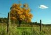 Fall in Avon, CT