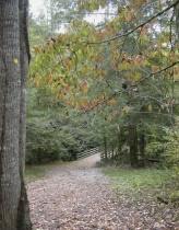 Fall in North Carolina - After