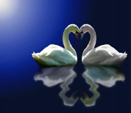 Swan Love.