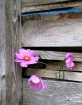 Fall Barn Bouquet