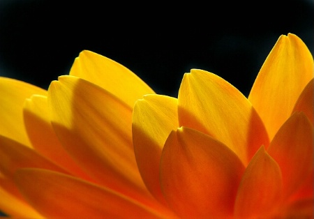 A Flower Aflame