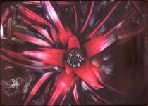 L5_Exotic Flower_Orig. Photo