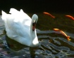 Swanee!! Pose For...