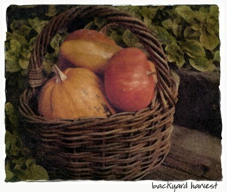 nbackyard harvest