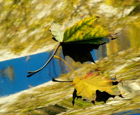 Leaves, Shadows and Reflections