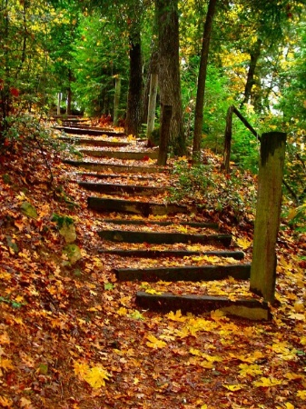 Autumn Littered Stairway