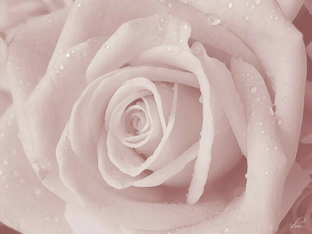 Frosted Rose II (second in series)