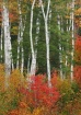 Birch weave