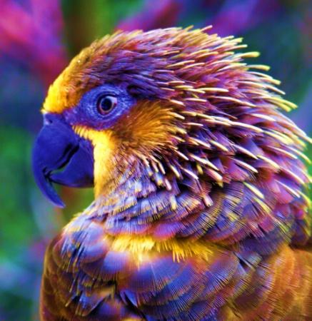 Psychodelic Bird
