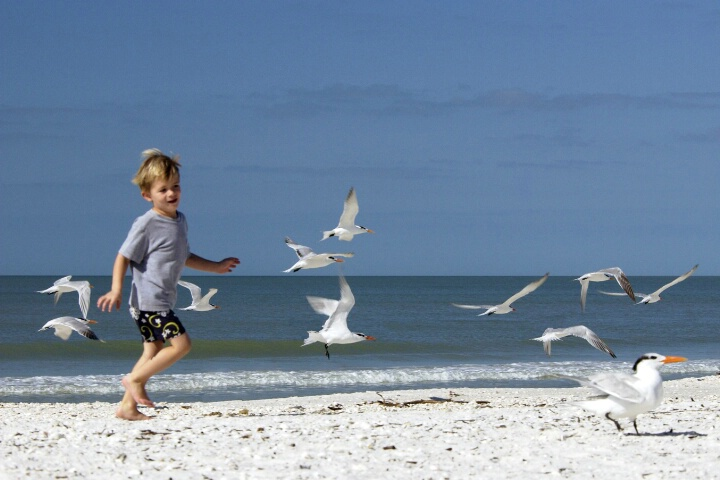 Running with the Gulls