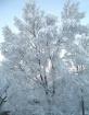 Winter Returns 20...