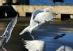 Gulls on the Pier