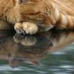 Feline Reflection...