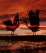 Spirit Cranes