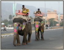 Amber Fort Elephants