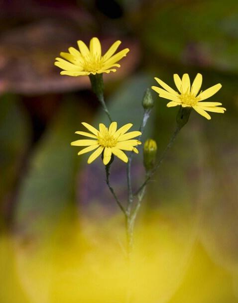 Wild Flower 10-7-04 - ID: 644756 © Robert A. Burns