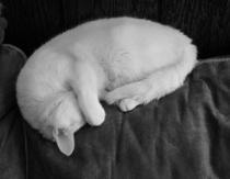 White cat black and white