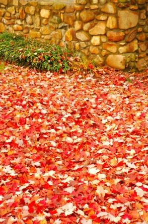 Leaf Walk