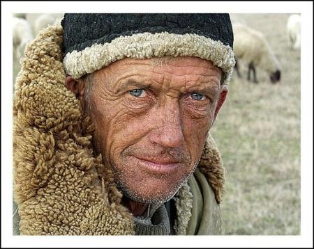 Shepherd(2)