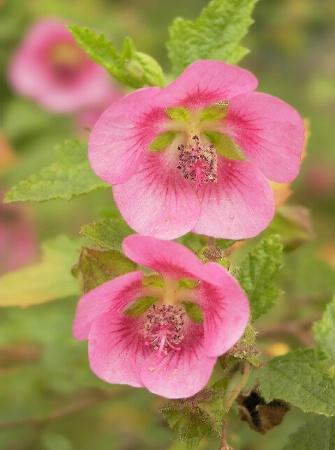 Tara's Pink