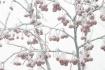 Winter (Crabapple...