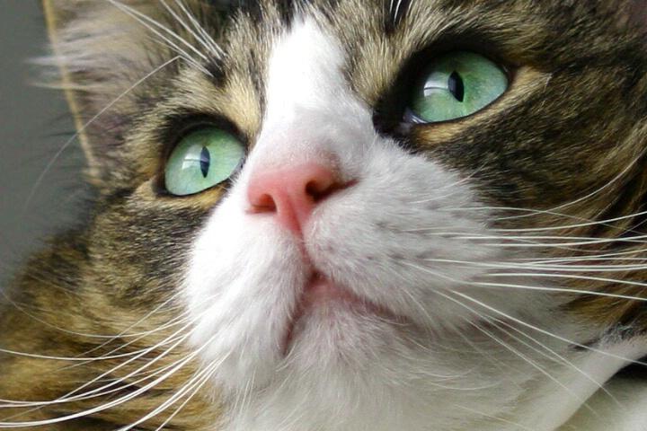 Glassy Eyed