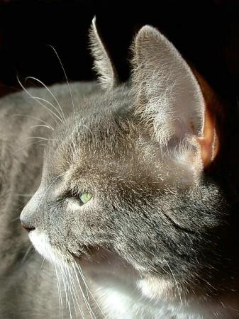 Profile of Simba