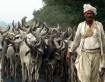 Cattle Leader_Dwa...