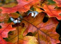 Autumn Leaves-Cuyahoga Valley National Park