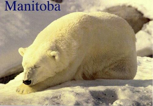 Polar Bear - ID: 665256 © Heather Robertson