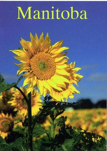 Sunflower - ID: 665278 © Heather Robertson