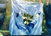 racoon in jeans