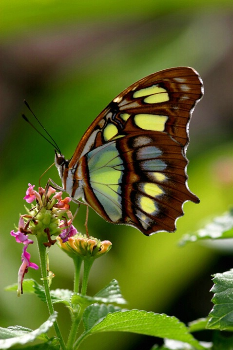Butterfly II <br><b>©  Jeff Grabert</b>