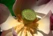 Artistic Lotus